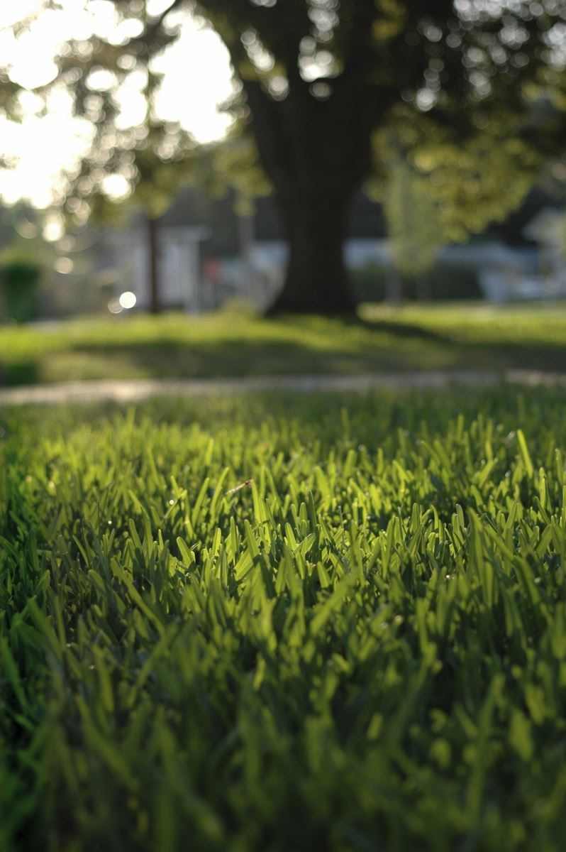 Sulfur treatment will help balance PH of the soil making needed nutrients more available to your lawn